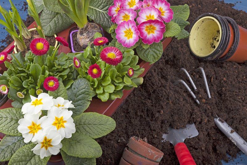 alquileres Majo en Madrid para crear tu jardín