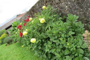 descubre las herramientas que necesitas en primavera para tu jardín