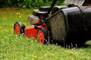 Pon tu jardín a punto en verano - Majo - Alquiler de herramientas de jardinería en Madrid