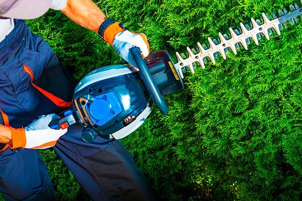 Mejor alquiler de herramienta de jardinería
