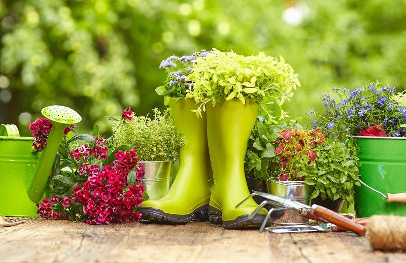 motosierras para el cuidado de tu jardín