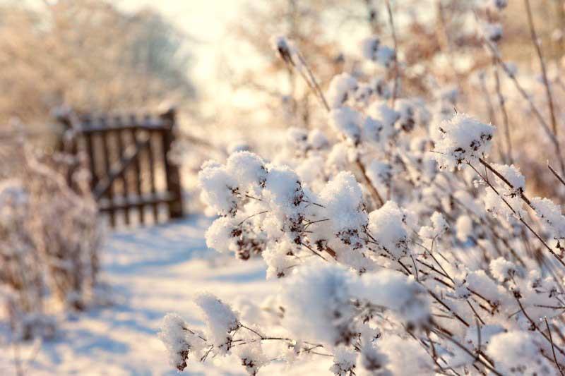 Consejos para cuidar tu jardín durante invierno