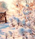 Cuidado del parquet en invierno