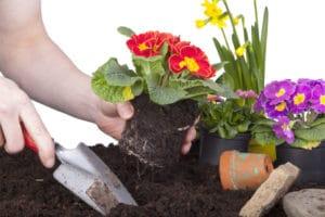 Coloca plantas en tu oficina en casa para decorar y para desestresarte